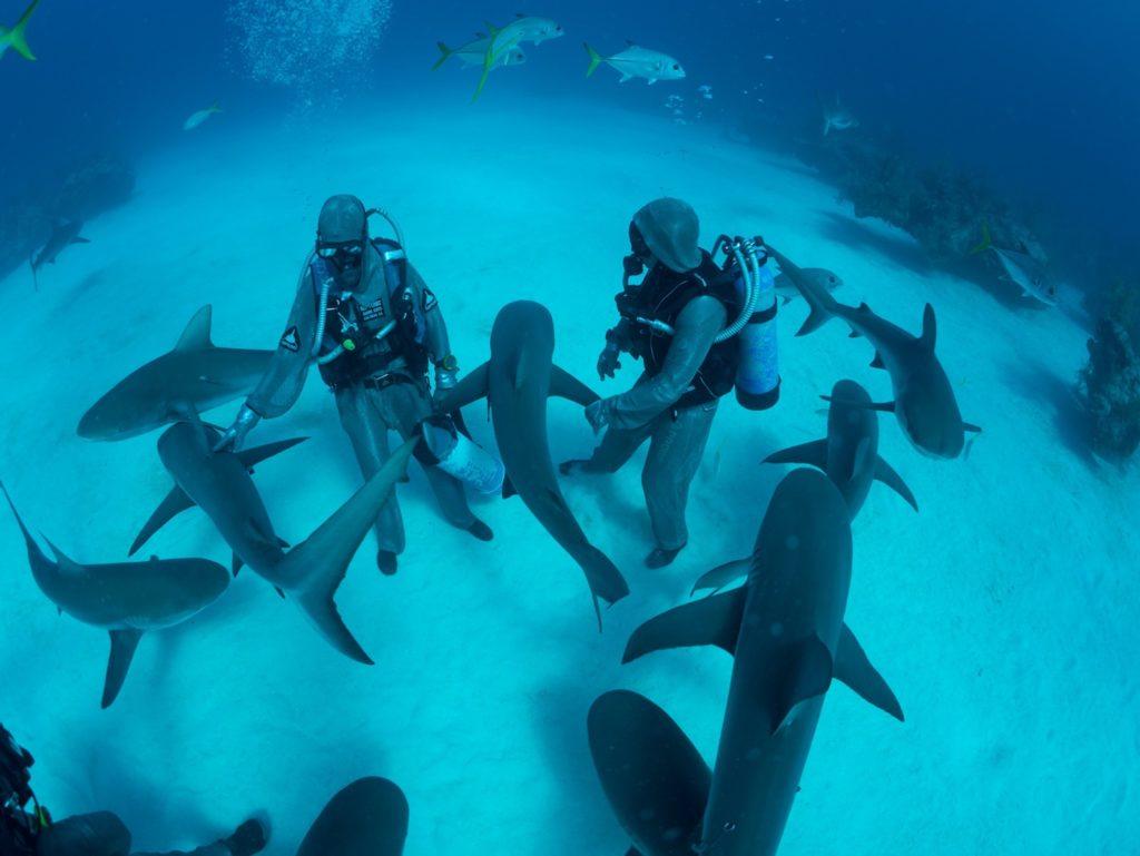 experience shark