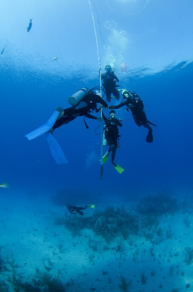 openwater_divers000
