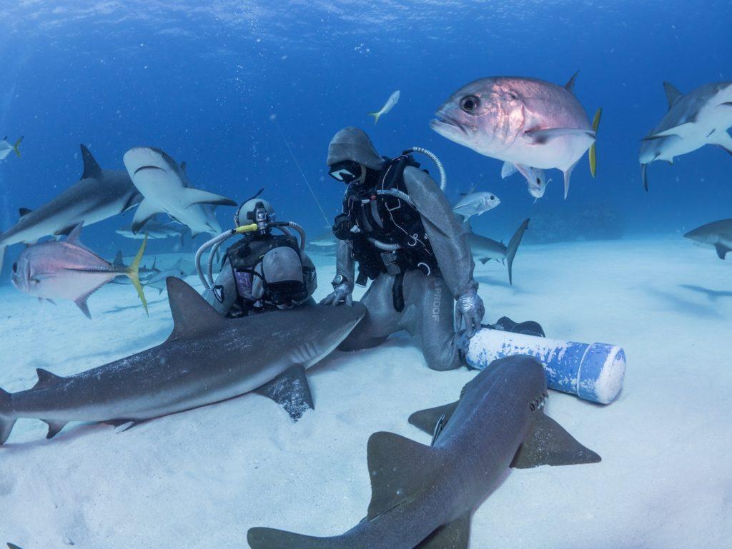 shark course